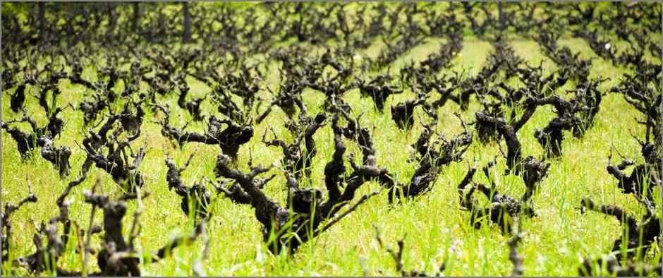 Виноградники замка Колосси