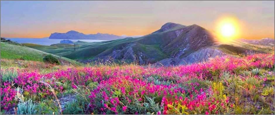 landscapes-nature-flowers-yellow-pink-grass-hills-1936x600-wallpaper