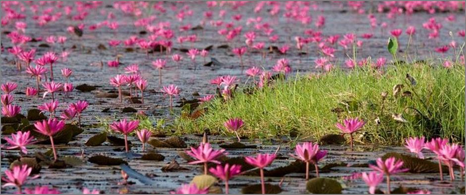 Lotus-Lake-3