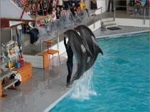 «Ижевск вместе с дельфинами». 1 день, автобус