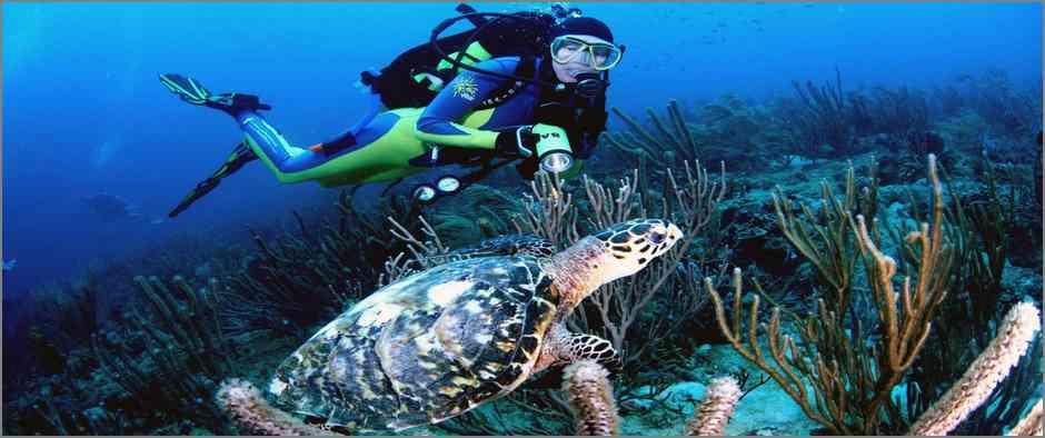 scuba-diving-turtle