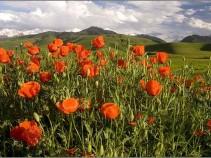 «Май в Адыгее — уже лето, мультиактивка»(7 дн./6 н.), комбинированный тур.