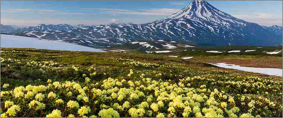Цветущая Камчатка - blooming Kamchatka Photo by Денис Будьков (35photo.ru/photo_740457) Июль 2014. Камчатка удивительный край. В горах не успевает сойти снег, как на открытых участках уже начинает цвести Рододендрон золотистый, а через каких-то пару недель вся эта горная тундра будет усеяна розовым ковром из Камчатского Рододендрона. На дальнем плане вулкан Вилючинский (2180 м.) July 2014. Kamchatka wonderful region. In the mountains outdoors is already beginning to bloom golden rhododendron, and after a few weeks the whole mountain tundra dotted with pink carpet from Kamchatka rhododendron. In the background Vilyuchinsky volcano (2180 m).