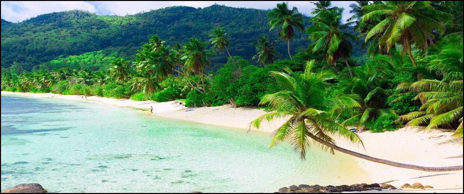 Пхукет пальмы