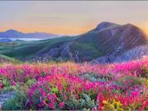 Весна в Крыму. Экскурсионный тур, 12 дней.