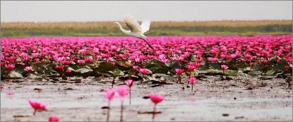 Lotus-Lake-5 (1)