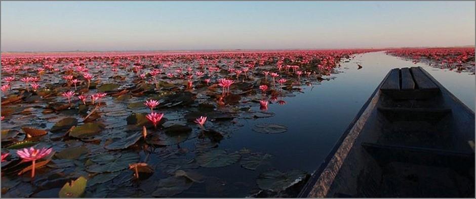 Lotus-Lake-7
