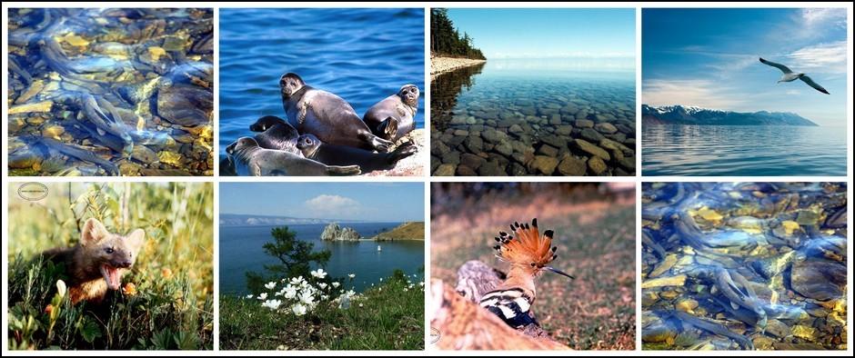 Экскурсионный тур: «Встреча с Байкалом», 7 дней / 6 ночей
