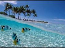 Летим на остров свободы и страны вечного лета!