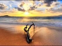 Чистые пляжи Гоа, ждут только Вас! Цены от 29100 рублей.