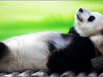 Китай: грандиозное снижение цен! 12 дней на о. Хайнань за 23 900 рублей