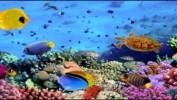 Курс на Красное море.Горящие туры на  26 ноября, суперцены.