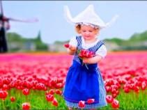 Очарование весенней Голландии – Национальный парк цветов «Кекенхоф»