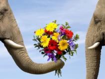 Горящие туры на Шри-Ланку, на 12 дней с прямым перелётом! Цены от 23 100 рублей!