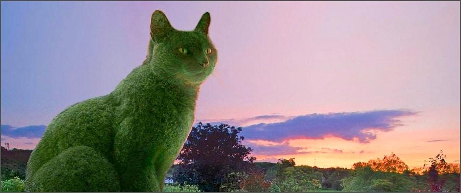 Кусты в виде кошек, покорившие весь мир!