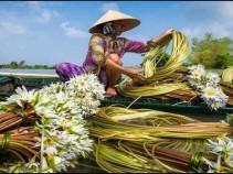Экзотические фрукты -Вьетнама! 12 дней от 41600 рублей.