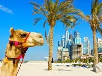 Отличные цены на туры в ОАЭ: 9 дней в сказочной стране за 16 800 рублей!