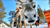 Новый Год для взрослых и детей в Финляндии! Туры на неделю от 29 400 рублей!