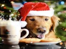 Как встречать Новый год 2018 – год Желтой Земляной Собаки.