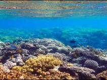 10 дней на Красном море от 15700 рублей.