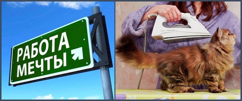Вакансии мечты: как бездельничать за деньги и гладить кошек за 25 тысяч евро?