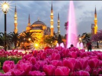 Фестиваль тюльпанов в Стамбуле с 09 по 30 апреля.