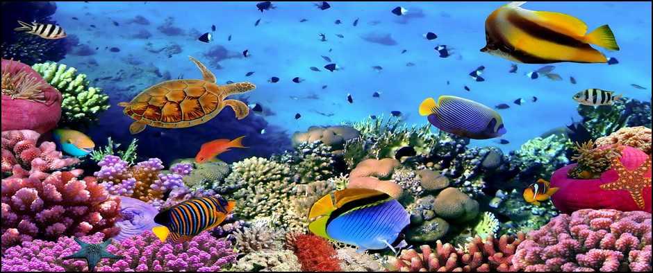 Самое соленое, самое красивое море в Египте. 8 дней от 30700.