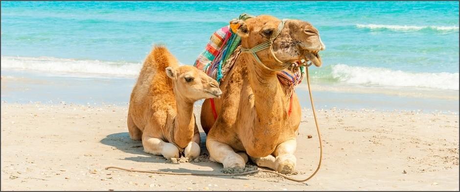 Отличный 4* отель на «Ультра Всё включено» в Тунисе по акции раннего бронирования! Туры от 28 800 рублей