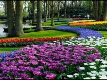 Тур в Голландию в парк цветов Кекенхоф. 8 дней от 23200 рублей.