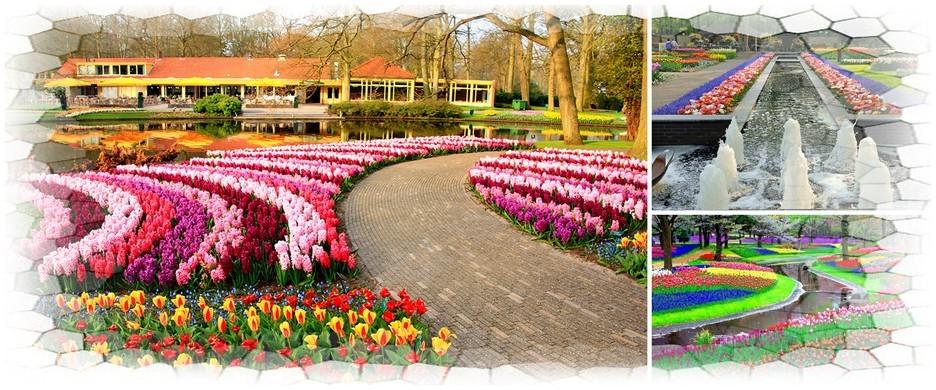 Тур в Голландию в парк цветов Кекенхоф. 8 дней от 23200.