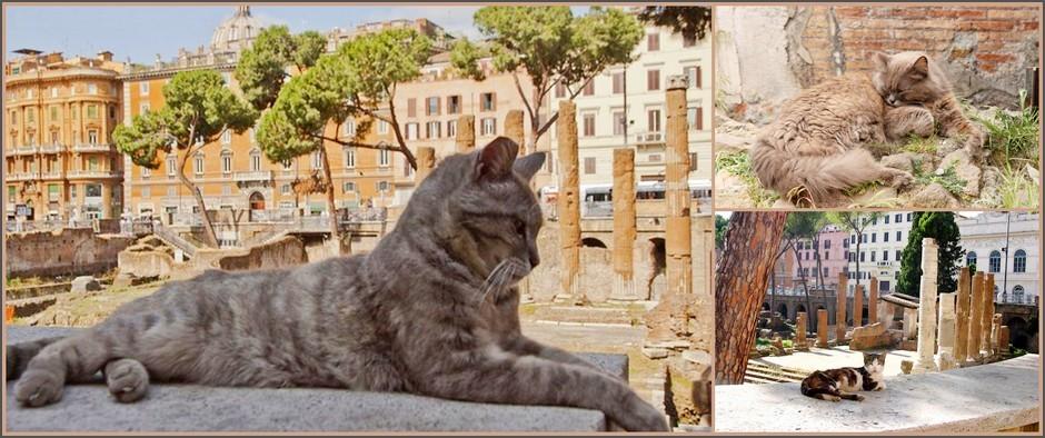 Достопримечательности мира, которые непременно стоит посетить всем любителям котиков!