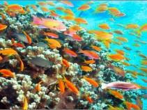 Сэкономь на отдыхе! Иордания, побережье Красного моря в декабре от 15 800 рублей