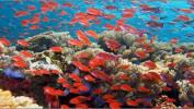 Каникулы на Красном море! Акаба вылет изМосквы 31.03.2019 на7 ночей от 28 500 рублей