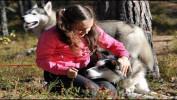 """""""С хаски в каске"""" (3 дн./2 н.), трекинг с собаками + сплав."""